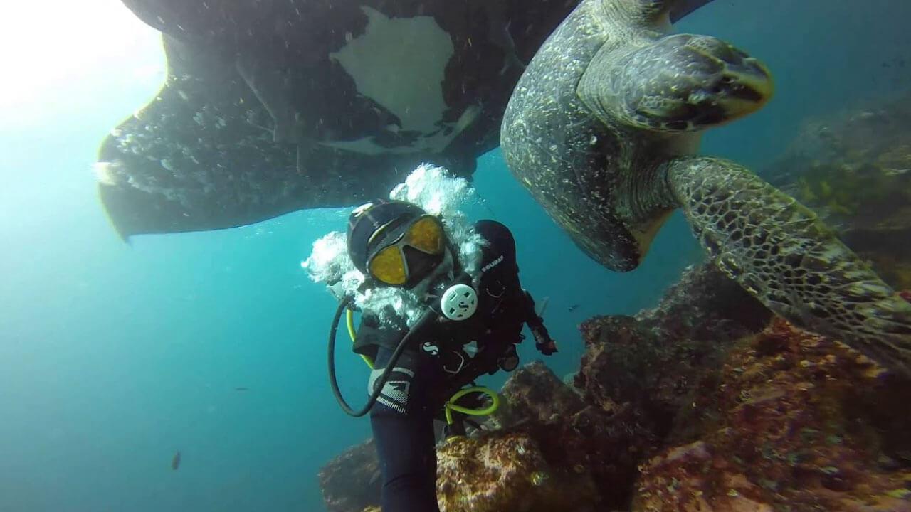 Mejores sitios de buceo en Ecuador